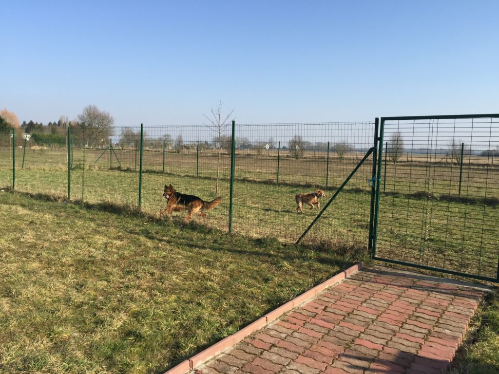 Pension canine - Parc de détente de 250m²